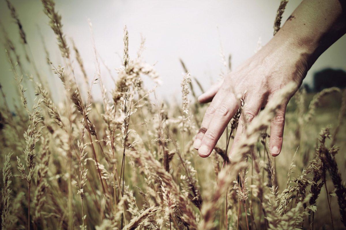 Współczesne rolnictwo