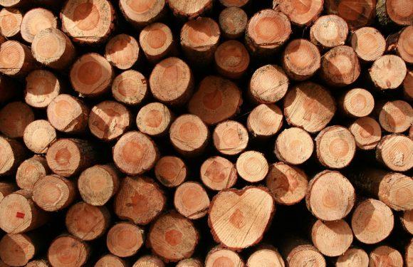 Po co jest obróbka drewna?