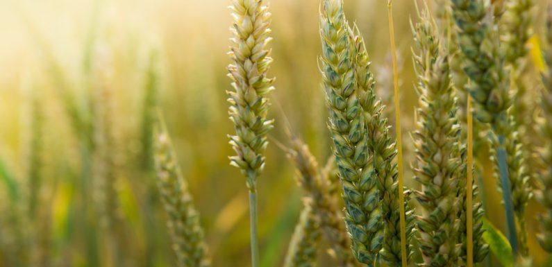 Rolnictwo musi się ciągle rozwijać